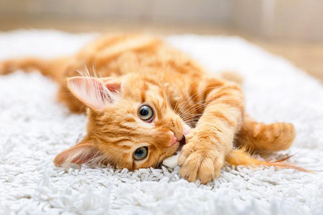 средство от кошачьего запаха